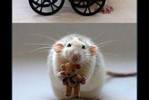 myši a potkany