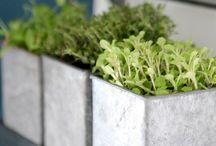 Indor herbs