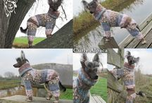 Knitted suits for Chinese Crested / Custom knitted clothes for Chinese Crested.