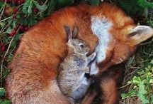 Foxes ^^