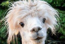 fav animals / All beautiful amazing animals