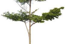 photoshop tree