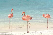Flamingo's... my very favorite! / by Anne Kepple
