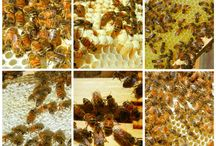 Bees / by Brenda Farnes
