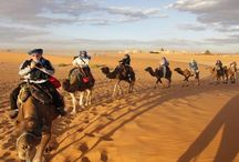 Camel Safari in Morocco / Camel Safaries is a tour company based in Marrakech, Morocco, which offers private tours that are customized to your taste, budget, and time frame.