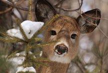 Gardening Despite Deer / by Linda Hoye