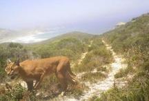Amazing Africa :)