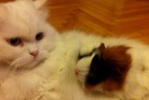 Cats,kids,pets..ect.