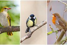 hangos madarak
