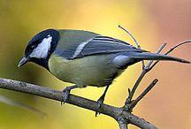 Talven lintuja