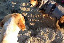 Daisy & Mira / Daisy & Mira fanno conoscenza (più o meno!)