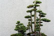 Bonsai I admire