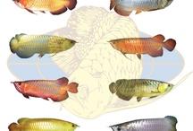 multi million dollar fish