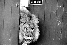 animals / by debbie lynn
