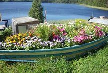 Plantes canoe