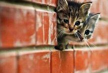 2 Cute! / by Andrea Kreykes