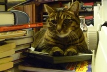 Penny the Library Cat / Pictures of, inspired by, or reminiscent of the Swansea Public Library's furriest employee.