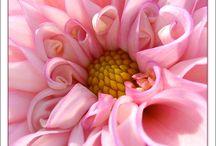Blooms / by Shelia Scherer