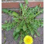 Gardening/Weeds
