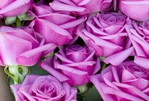 Flowers / #flower #flowers