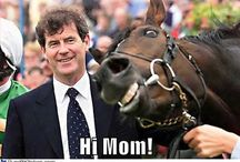 Funny / Horses and horse racing that makes us laugh!
