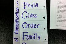 biology ideas classification