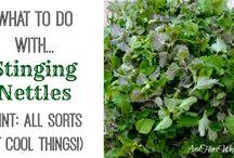 Eetbare planten verwerken / Zoeken en verwerken