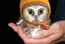 Owls & earths creatures