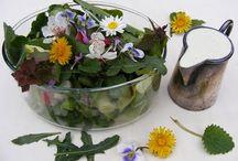 A természet ajándéka / ételek erdőből ,mezőről
