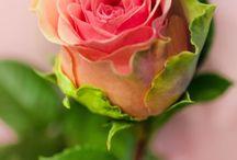 Флора.I.S. / Цветы - это жизнь, красота. Быть может, вся природа - мозаика цветов? Быть может, вся природа - желанье красоты? (Константин Бальмонт).