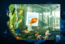 Aqua Fisch 2013