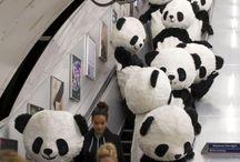 Pandas and more Pandas!!!