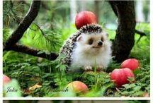 Character design Hedgehog