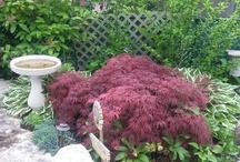 {Outside} Backyard Garden Ideas