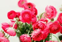 Wedding Color Schemes / Flowers, colors, shades, life with color