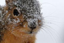--Ideas of Animalistic Photos--