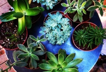 Gardenista - plants, herbs, gardening