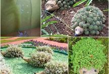 Hedgehogs for gardening / Recycled bottles