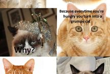 Cat conversation / Grumpy cat will never feel better