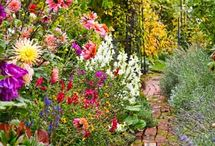 late summer/early fall flowers / by Kathy Collier
