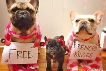 French Bulldogs / Because Techie is a Frenchie!
