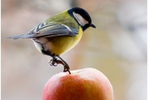 Birds / Ptaki Polski