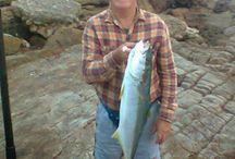 4u2gofishing / Images of fishing spots and fish caught along the South Coast of KZN South Africa also known as the Hibiscus Coast / by Info4u