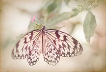 pretty things with wings... / Without change we wouldn't  know the beauty that is the butterfly or the dragonfly!  / by Michelle Maher