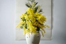 Flowers / Flores