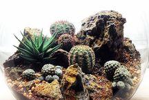 Succulent n dessert terrarium