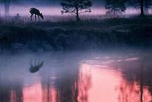 natur / by Rita Jensen