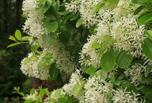 New York Natives / Take your garden back to its roots with native plants