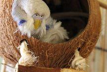 • inspiration • parakeet