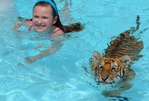 Swim with a Tiger / Swim with a TIger At Dade City's Wild Things